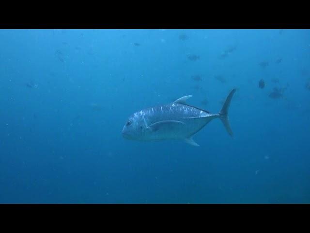 Family diving at Asia Divers & El Galleon Dive Resort   Puerto Galera Philippines