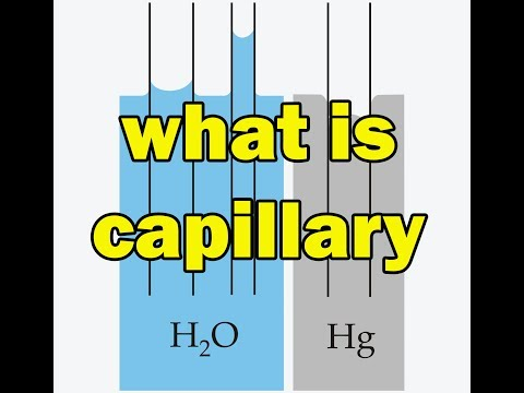 What Is Capillary Action-capillary Rise And Fall In Hindi | Explain Capillary Action In Hindi