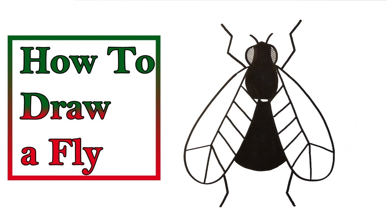 How To Draw a Fly - Very - Easy For Kids #1