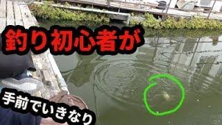 釣り初心者がこんな手前ですぐ釣る!?【ナウ・ピロ】 thumbnail