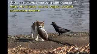 видео котоматрицы