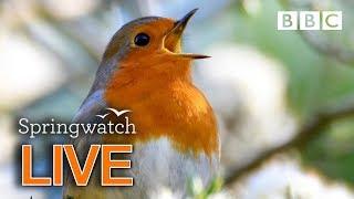 Cute wildlife cams Day 5  | BBC Springwatch
