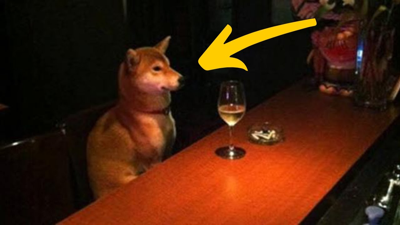 Dog Walks Into a Bar The Reason Why Will Shock You !