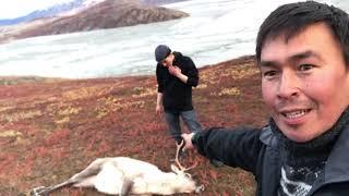aavarneq-2018-rensdyrjagt-2018-del-1-reindeer-hunting-2018-part-1