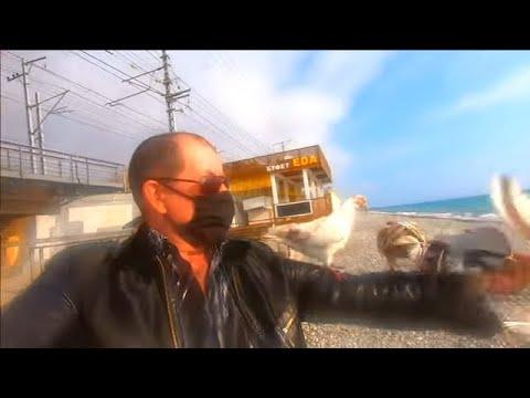 🔔Голуби меня атакуют\ Лазаревское море пляж отдых 2020\ Сочи 2020