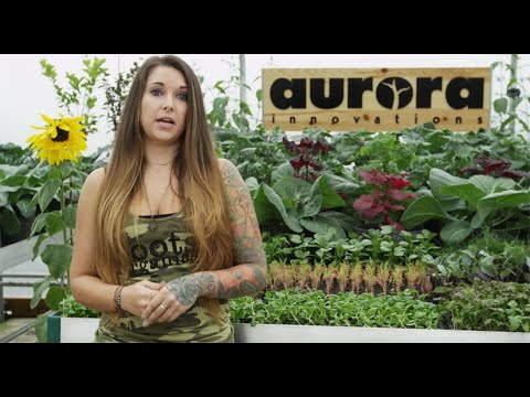 Aurora Innovations Roots Organics Liquid Nutrients