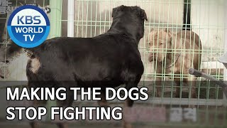 Making the dogs stop fighting [Dogs are incredible/ENG/2020.03.31]