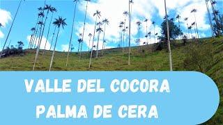 Valle de Cocora - Palma de cera - Salento Quindio Colombia