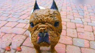 30 причин, по которым не стоит позволять собаке играть в грязи