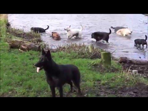 'Snertwandeling' zondag 7 februari / Hondenvereniging De Schie