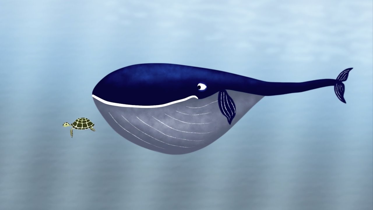 whale youtube - Picture Of A Whale