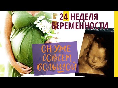 Как выглядит ребенок в 24 недели