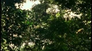 Odc 3 Goryl   największa z małp 2
