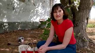 СИМФЕРОПОЛЬ. Женщина 10 ЛЕТ кормит бездомных КОШЕК