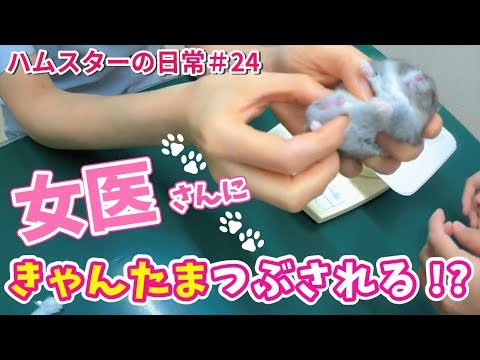 [Hamster] As a result of taking me to an animal hospital, a female doctor grasped the testicles ...из YouTube · Длительность: 3 мин3 с