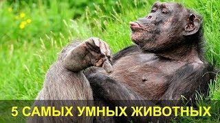 5 Самых Умных Животных. Самые Умные Животные в Мире.