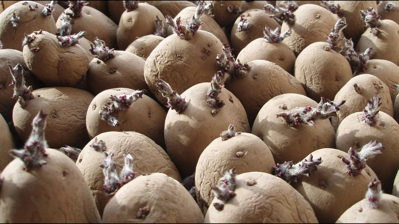 Image result for potato chits