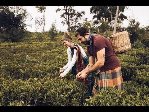 Tea Factories and Trains: The Honeymoon, Part III, Sri Lanka [travel vlog]