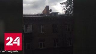 Падающие деревья в Москве убили уже шестерых человек