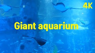 The Best 4K Giant aquarium for…