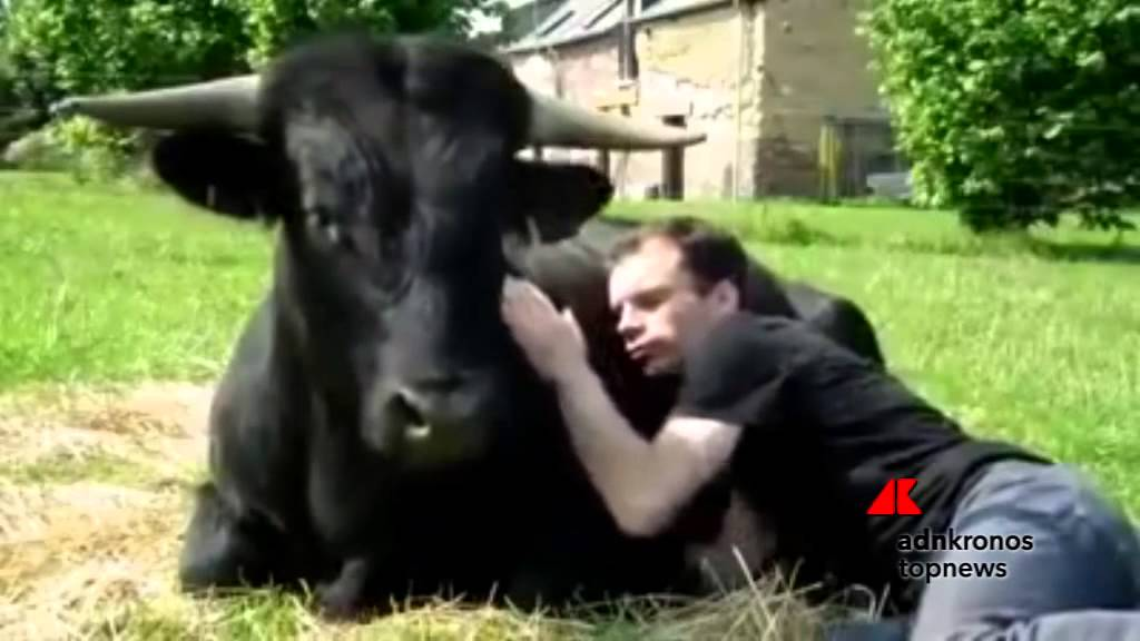 Corrida Image carezze al toro 'salvato' dalla corrida  - youtube