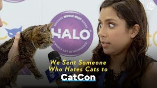 We Sent Someone Who Hates Cats to Cat Con