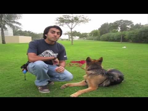 How to teach ANY dog to Come when called!
