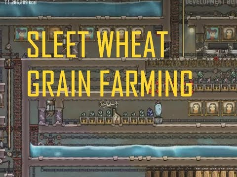 ONI - A Guide to sleet Wheat grain farming