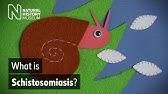 schistosomiasis osmosis