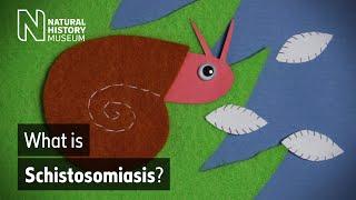schistosomiasis history