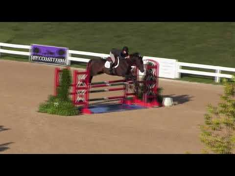Video of STRAVIATY ridden by LINDSAY MAXWELL from Net!