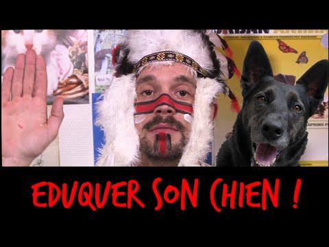 Collier Anti Aboiement Pour Petit Chien Citronnelle - Astuces - Éducateur canin - Comment y arriver ?
