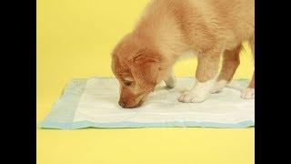 how to potty train a puppy.potty training a dog.puppy potty training.potty training a puppy