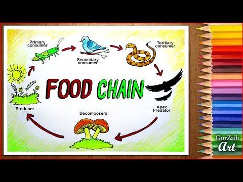 How to draw Food Chain Diagram poster chart drawing for beginners ( easy ) step by step