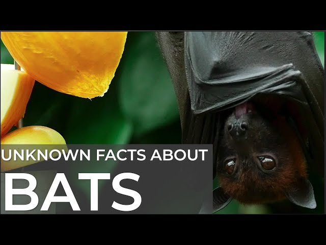 Did You Know ? This Unknown Amazing fact about BATS | Birds | Mammals & Cleanest Bird on Earth