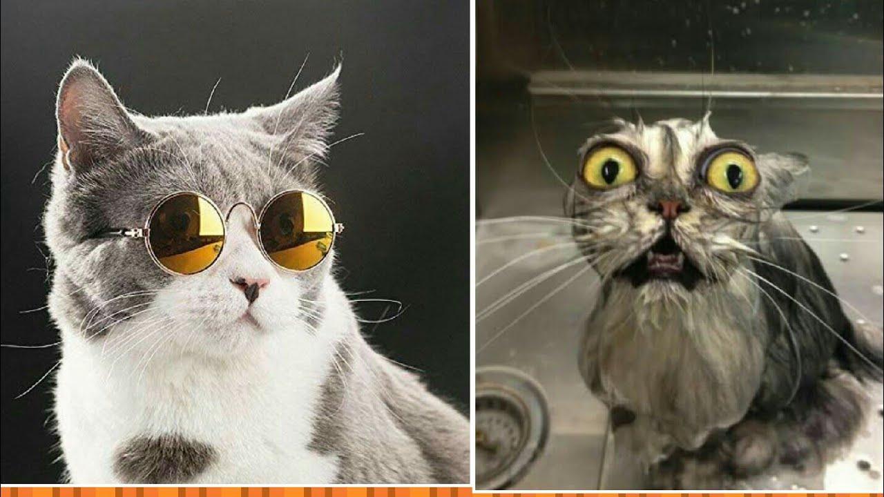 Funniest Animal Videos Compilation June 2020 From Tiktok