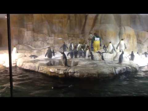 Antarctic Penguin Feeding Demonstration Omaha's Henry Doorly Zoo & Aquarium