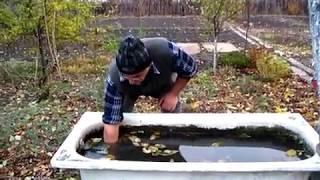 видео Используем старые бочки под огород! Овощи в бочках - секреты выращивания и полезные советы при высадке растений в бочку