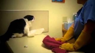 Katzen greifen Menschen an 2015