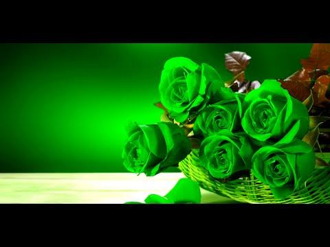 casino rose