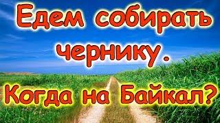 Уезжаем за черникой. Мы в инстаграмм. Поездка на Байкал. (07.17г.) Семья Бровченко.