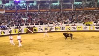 Passion Saltador Nuit du Toro 2015 les Yeux Émilie