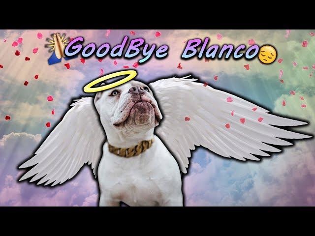 GoodBye Blanco