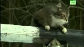 Животные Чернобыля . Часть 6