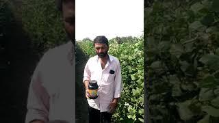 Mixol - D Mahafeed product use farmer