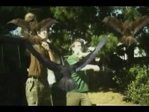 Pájaros del Terror, the movie
