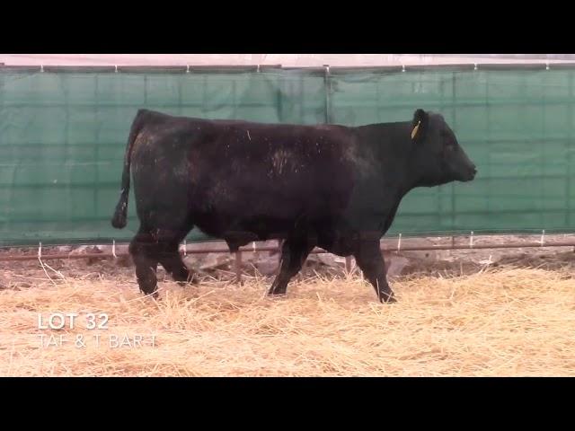 Taliaferro Angus \u0026 T Bar T Angus Ranch - 32