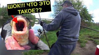 ДЕД РЫБАК ШОКИРУЕТ КЛЁВОМ ЧТО С ЭТОЙ РЫБОЙ Ловля на фидер Рыбалка 2021