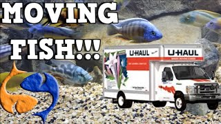 Moving Fish To Your New Home! Tank Talk Presented by KGTropicals!