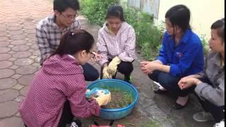 hướng dẫn cho bà con về phương pháp ủ chua cỏ tươi cho gia súc vào mùa đông